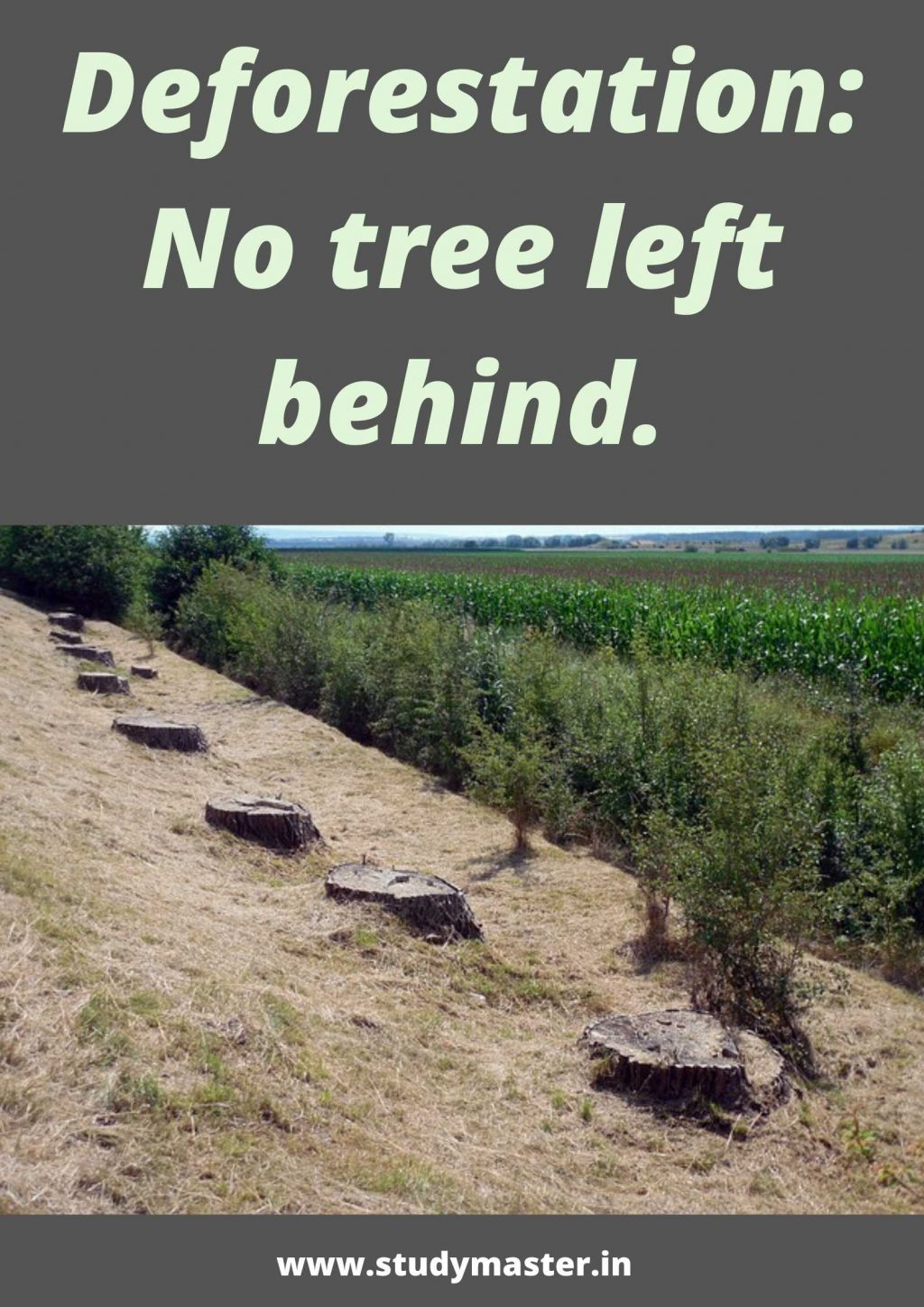 poster to spread awareness on deforestation