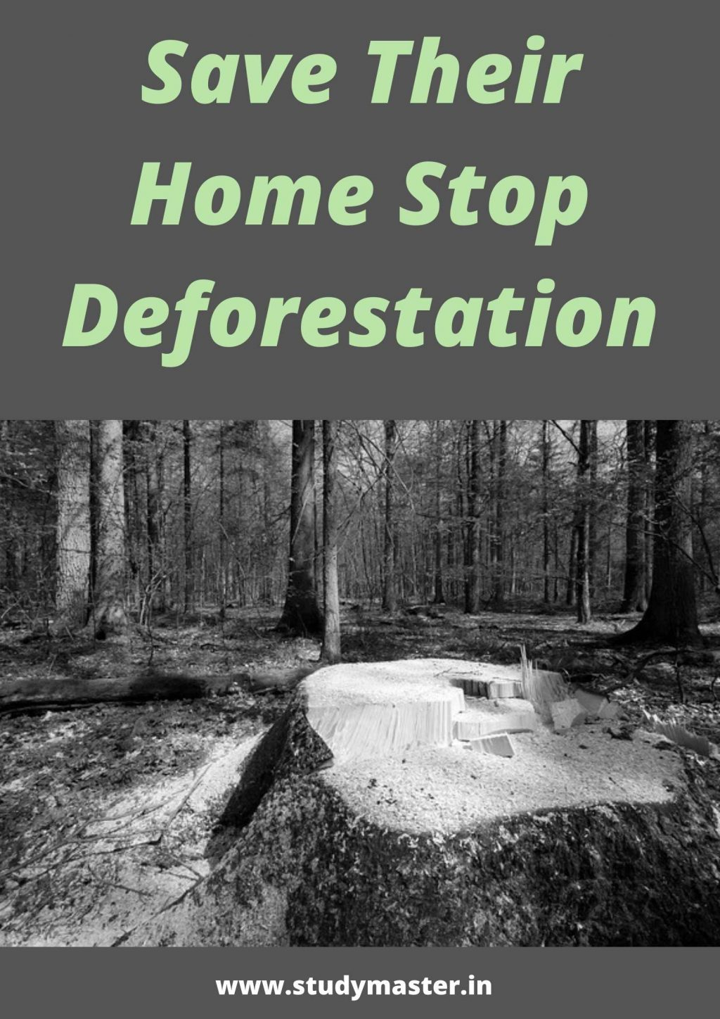 poster on deforestation and greenhouse effect