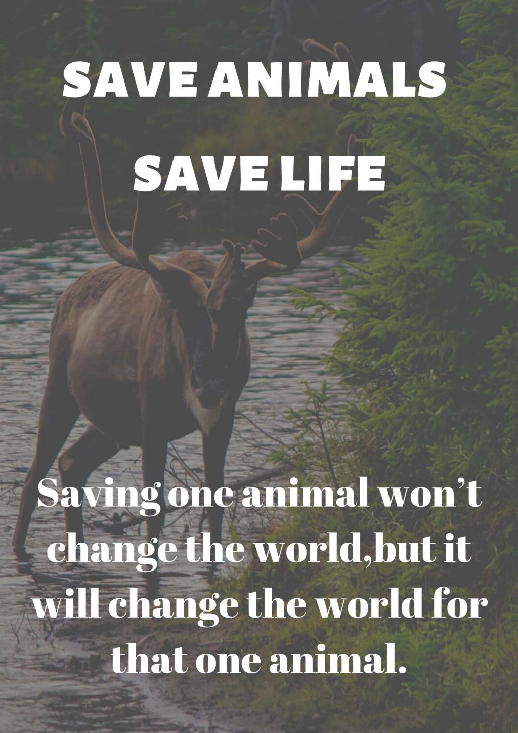 poster for save animals