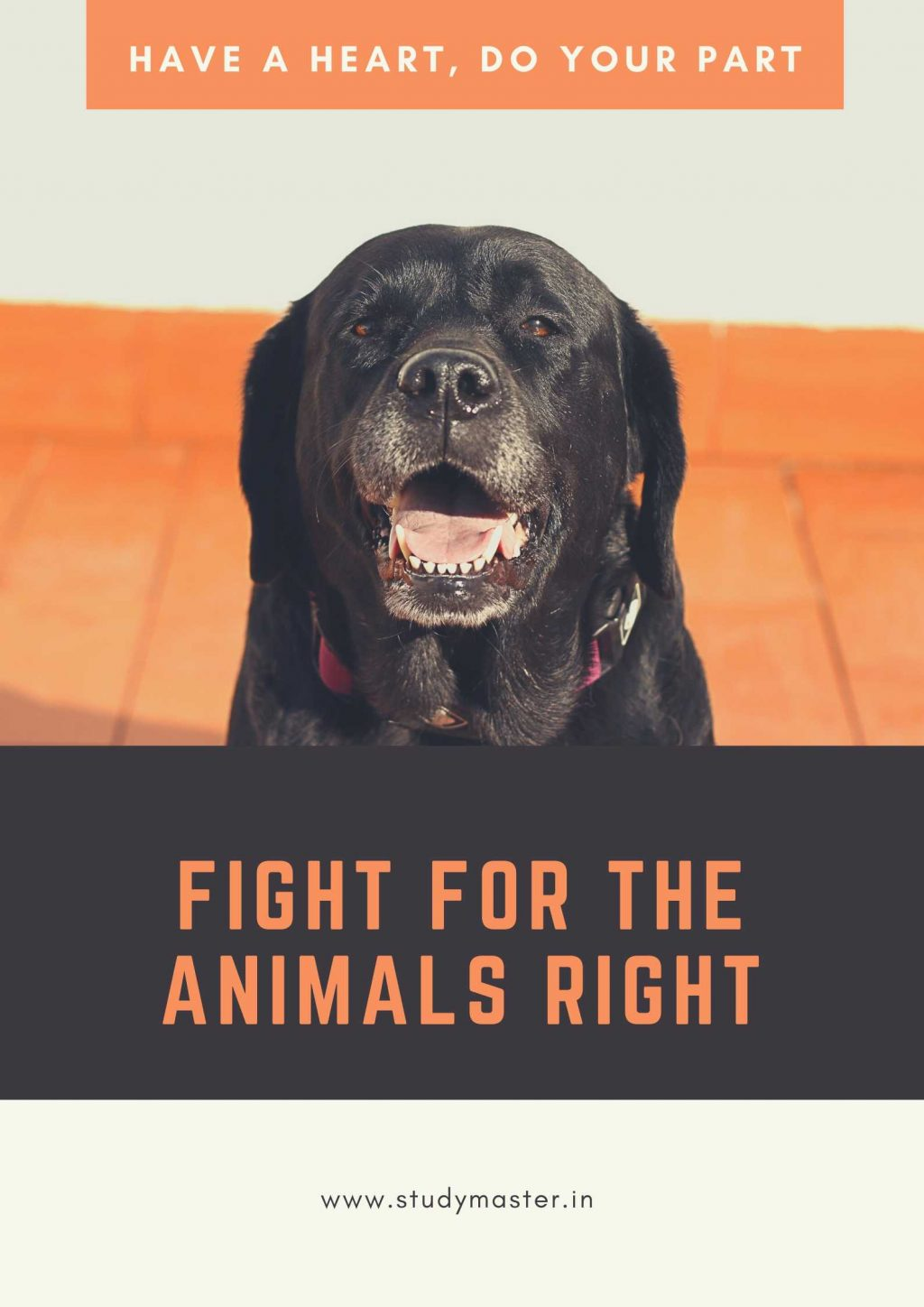 poster on save animals