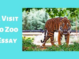 A Visit to Zoo Essay